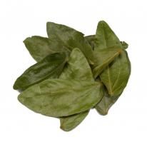 Bobinsana Leaves | Calliandra angustifolia