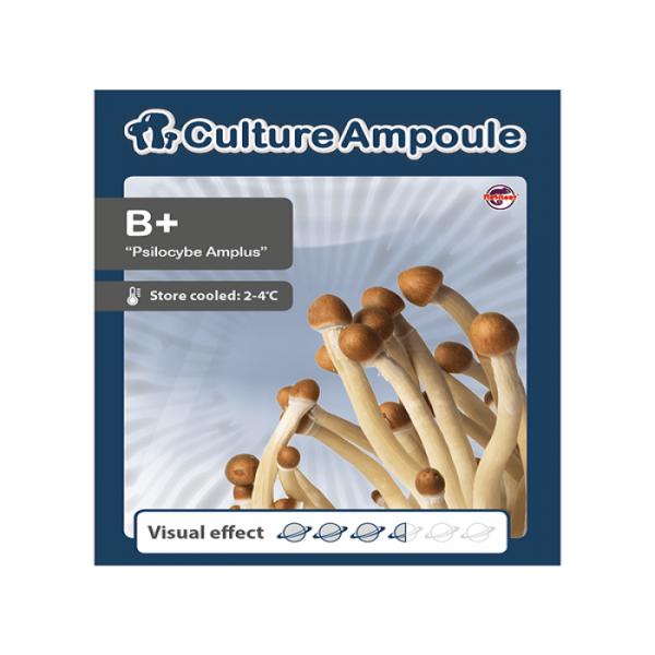 Buy B Plus - Culture Ampoule