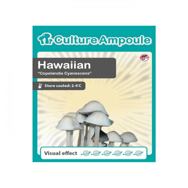 Buy Hawaiian Culture Ampoule