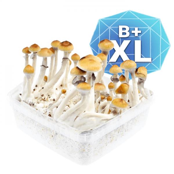 Buy B Plus Growkit - Xl