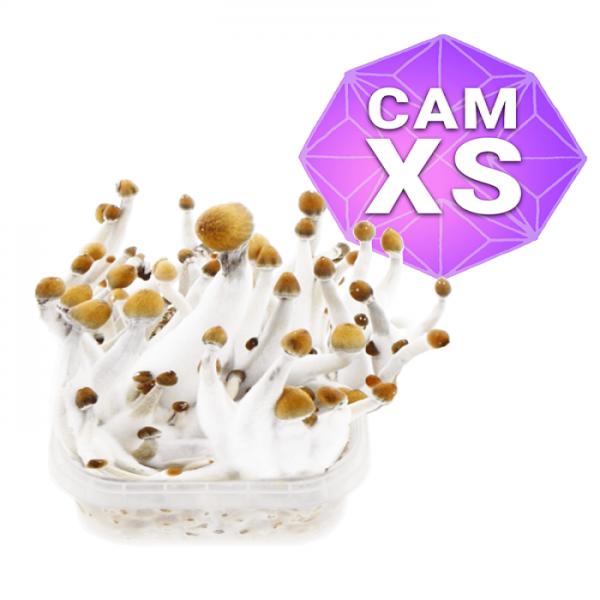 Cambodian Growkit Xs online