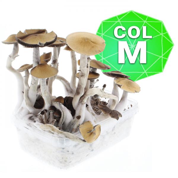 Colombian Growkit - Medium