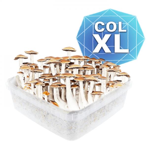 Colombian Growkit - Xl