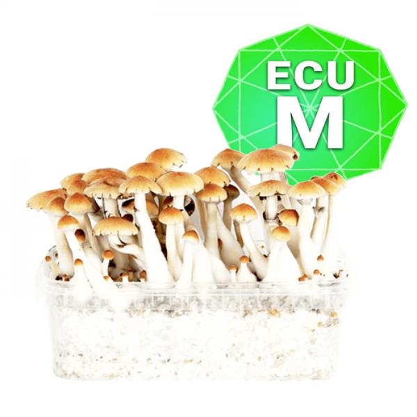 Ecuadorian Growkit - Medium online