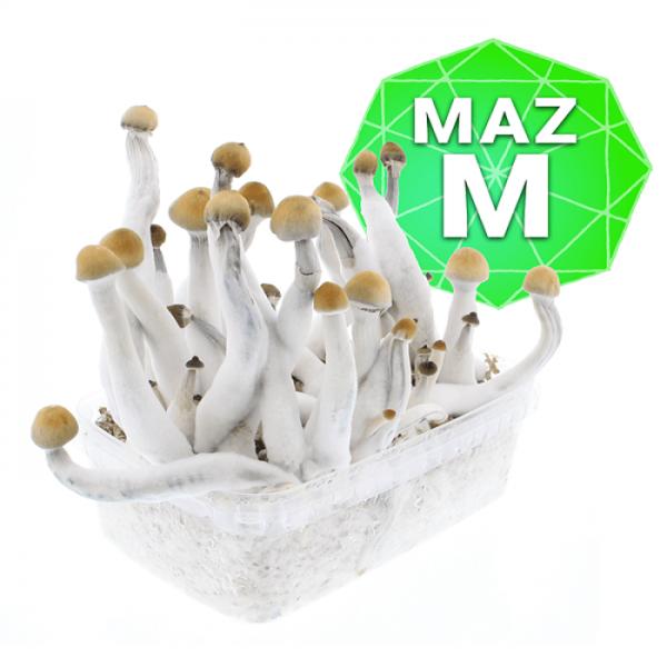 Mazatapec Growkit Medium online