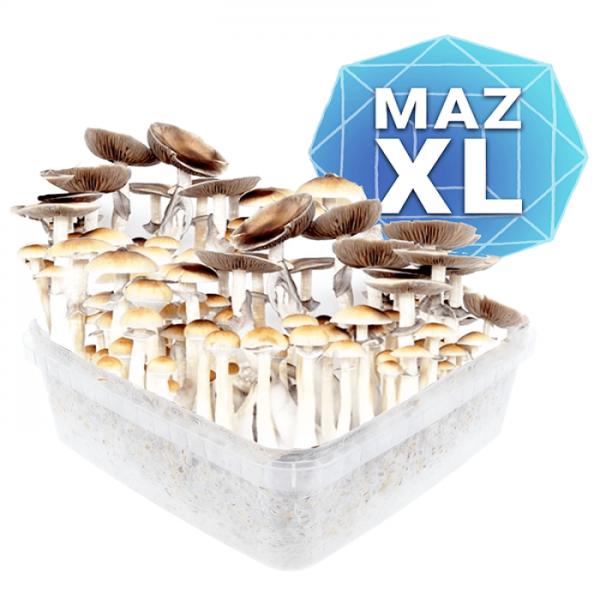 Buy Mazatapec Growkit - Xl
