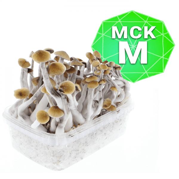 Mckennaii Growkit - Medium online