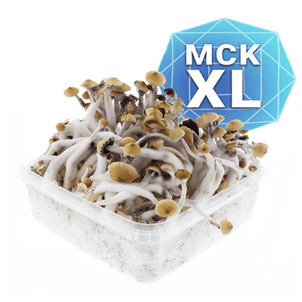 Mckennaii Growkit - Xl online