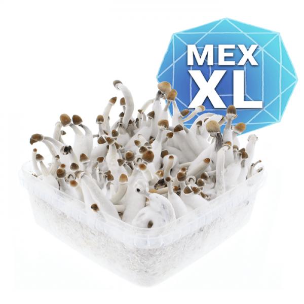 Mexican Growkit - Xl online