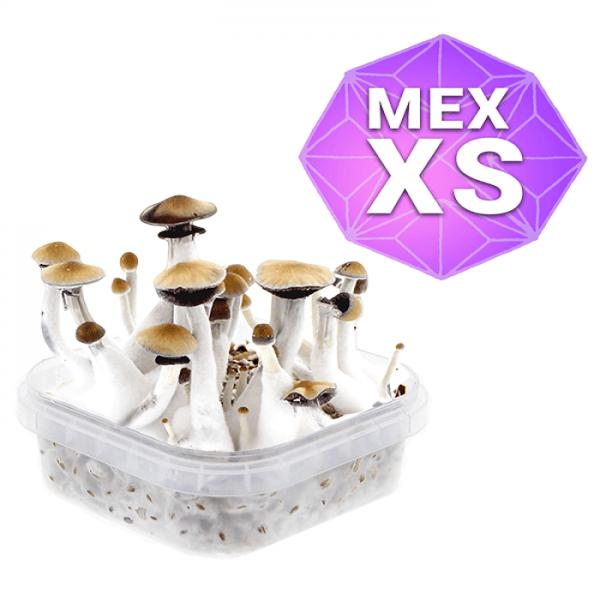 Buy Mexican Growkit - Xs online