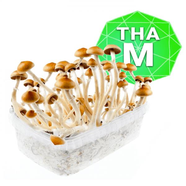 Thai Growkit - Medium online