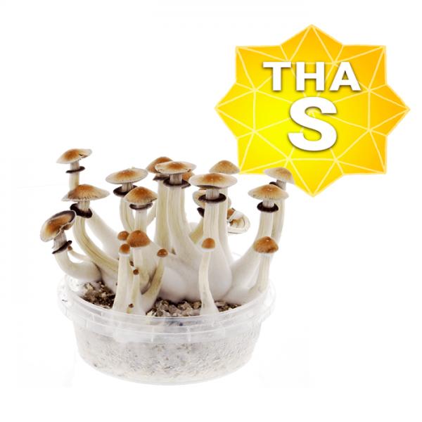 Thai Growkit - Small online