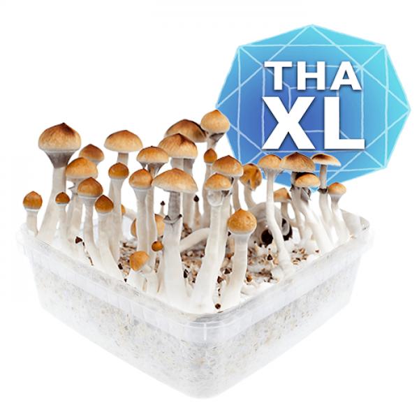 Thai Growkit - Xl online