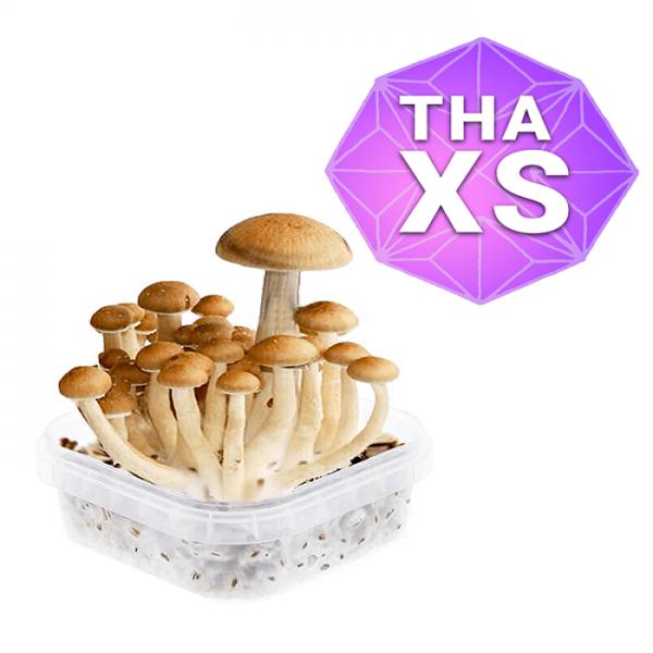 Thai Growkit - Xs online