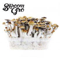 Buy Shroomgro Superpack online